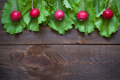 Lettuce and radishes. Ingredients for a salad. Free space for text Royalty Free Stock Image