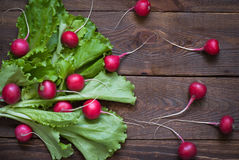 Lettuce and radishes. Ingredients for a salad, a healthy food Stock Photography