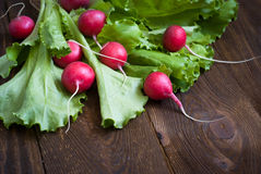 Lettuce and radishes. Ingredients for a salad, a healthy food Royalty Free Stock Photography