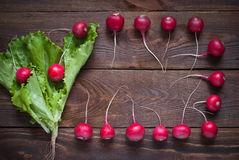 Lettuce and radishes. Ingredients for a salad, a healthy food Stock Images