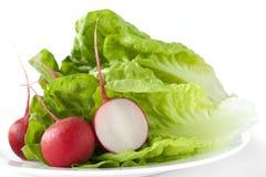 Lettuce and radishes Royalty Free Stock Photo