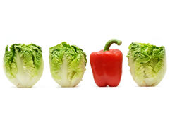 Lettuce and red pepper Stock Images