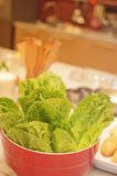 Lettuce. In the red pot on the table on the kitchen Stock Image