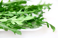 Lettuce rocket ( arrugula ) Stock Photos