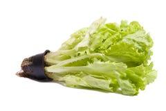 Lettuce salad. Stock Photo
