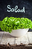 Lettuce salad in a bowl Royalty Free Stock Photo
