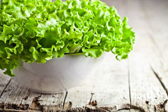 Lettuce salad in a bowl Stock Photos