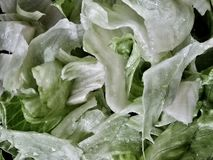 Lettuce salad. Closeup view of iceberg lettuce  salad Stock Photo