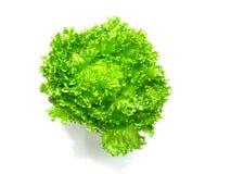 Lettuce salad fragmen Stock Photo
