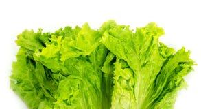 Lettuce salad Stock Images