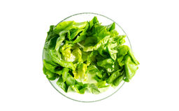 Lettuce Salad in a glass bowl Royalty Free Stock Image
