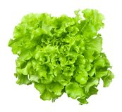 Lettuce Salad Head Isolated on White Background. Lettuce head isolated on white background. Batavia salad. Top view royalty free stock photo