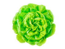 Lettuce salad head with water drops. Top view isolated on white Stock Images
