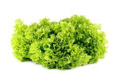 Lettuce salad on a white background Stock Photography