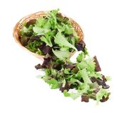 Lettuce salad. Royalty Free Stock Photos