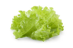 Lettuce salad isolated on white background Royalty Free Stock Photo
