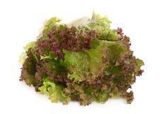 Lettuce salad leaf Royalty Free Stock Photography