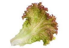 Lettuce salad leaf royalty free stock photo