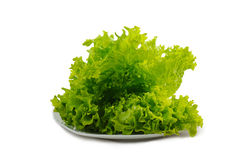 Lettuce. Salad leaves on  plate on  white background Royalty Free Stock Photography