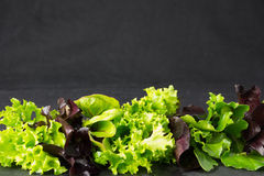 Lettuce salad leaves on stone plate, place for text Royalty Free Stock Photo