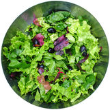 Lettuce salad Stock Photos