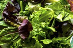Lettuce salad. Red and green lettuce mixed with spinach and beet leaves. greens salad Royalty Free Stock Photo