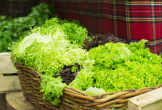 Lettuce salad in a shop Royalty Free Stock Images