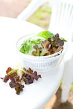 Lettuce salad in spinner Royalty Free Stock Photos