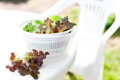 Lettuce salad in spinner Royalty Free Stock Photography