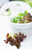 Lettuce salad in spinner Stock Image