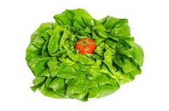 Lettuce salad and tomato Stock Photo