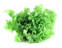 Lettuce salad on white background. Fresh lettuce salad isolated on white background Stock Photos