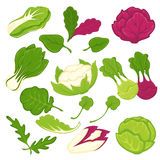 Lettuce salads leafy vegetables vector isolated icons set Stock Photos