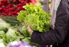Lettuce on sale Royalty Free Stock Photography