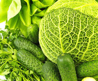 Lettuce, savoy cabbage,parsley, dill and cucumbers Stock Image