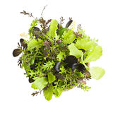 Lettuce seedlings. Potted seedlings of garden lettuce and salad greens from above Royalty Free Stock Photography
