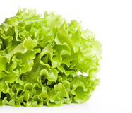 A lettuce is on the table Stock Images