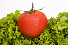 Lettuce and tomato Stock Images