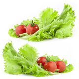 Lettuce and tomatoes. Isolated on white background Stock Photography