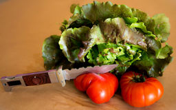 Lettuce with tomatoes Stock Photos