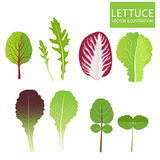 Lettuce Types Vector. Set Of Salad Bowl. Salad Vector Illustration Royalty Free Stock Images