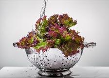 Lettuce under running water Royalty Free Stock Photos