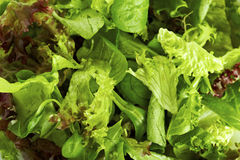 Lettuce variation Royalty Free Stock Image