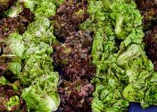 Lettuce. Varieties of lettuce at a farmer`s market stock photos