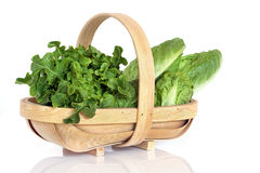 Lettuce Varieties in Rustic Basket Royalty Free Stock Image