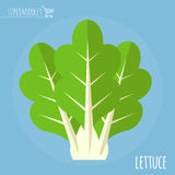 Lettuce vector icon.