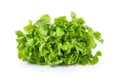 Free Lettuce Vegatable Isolated On White Background Royalty Free Stock Photo - 155579495