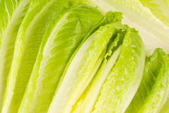 Lettuce vegetable Royalty Free Stock Image