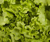 Lettuce vegetable food diet healthy eating Stock Photo