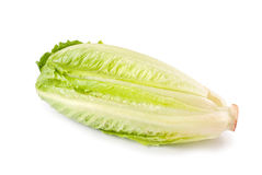 Lettuce vegetable on white background Royalty Free Stock Images
